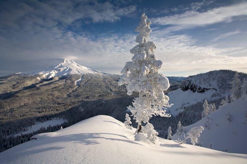 Download Mt hood sceny zima zdjęcie stock. Obraz złożonej z drzewo - 5043100