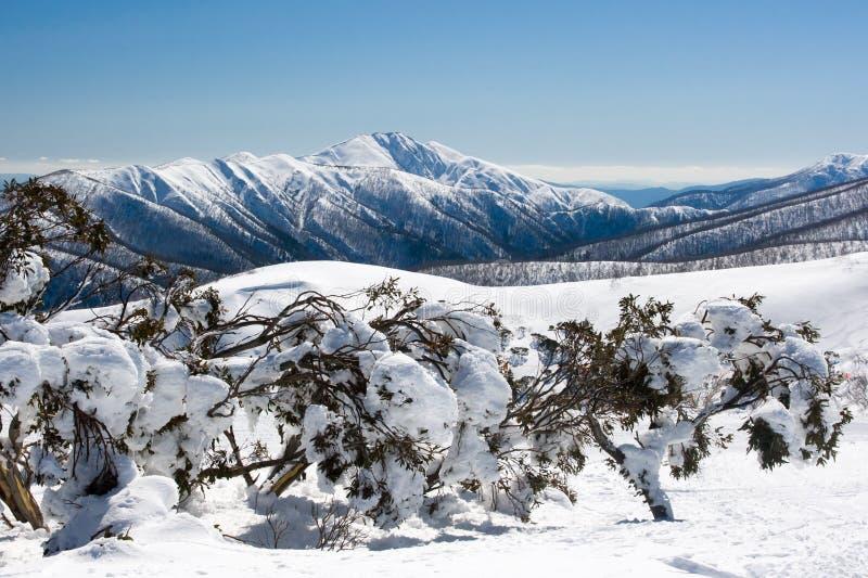Mt Hotham在冬天 免版税库存照片