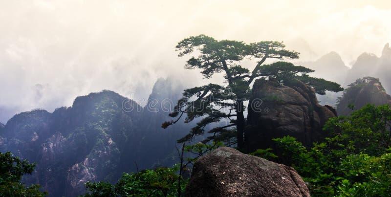 Mt Huangshan (gelber Berg) mit Kiefer, Anhui, China lizenzfreies stockfoto