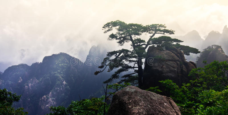 Mt Huangshan (gult berg) med sörjer trädet, Anhui, Kina royaltyfri foto
