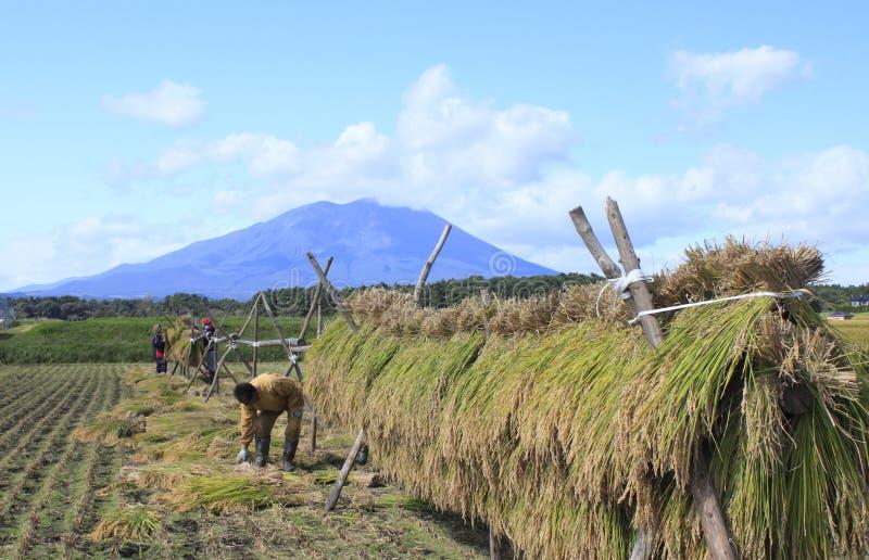 Mt.Iwate en Landschap van padieveld royalty-vrije stock foto's