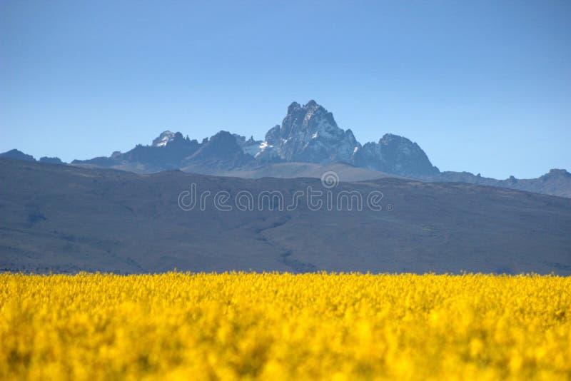 Mt Kenya arkivbilder