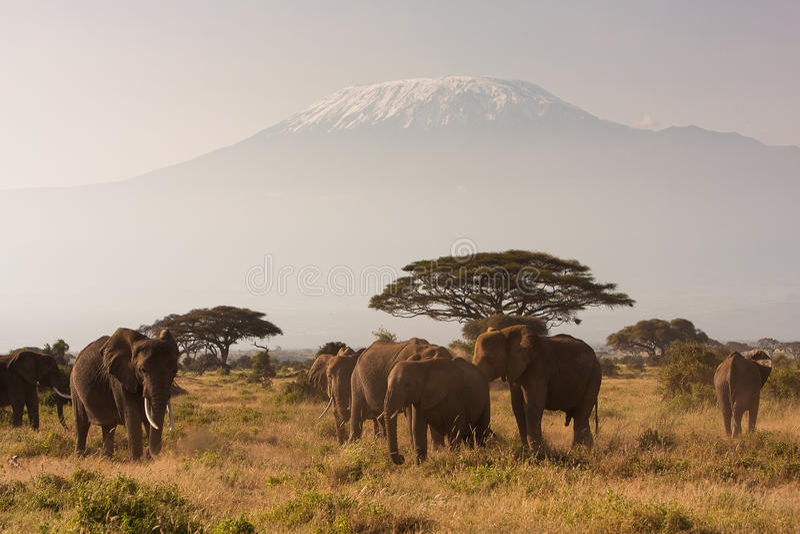 Mt Kilimanjaro fotografia stock