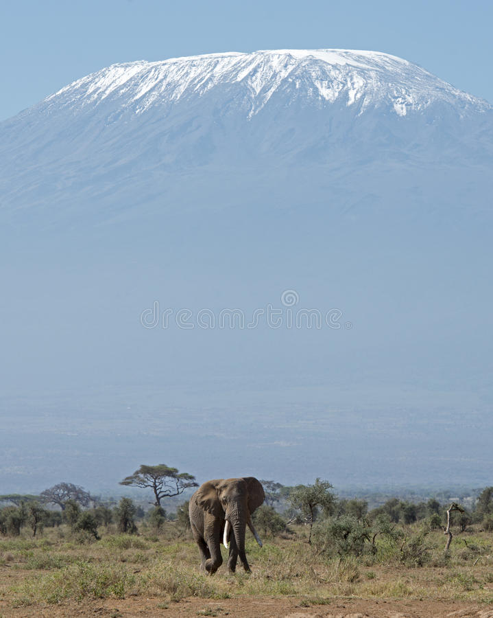 Mt Kilimanjaro and Elephant. Kenya Africa Amboseli reserve Mt Kilimanjaro and Elephant royalty free stock image