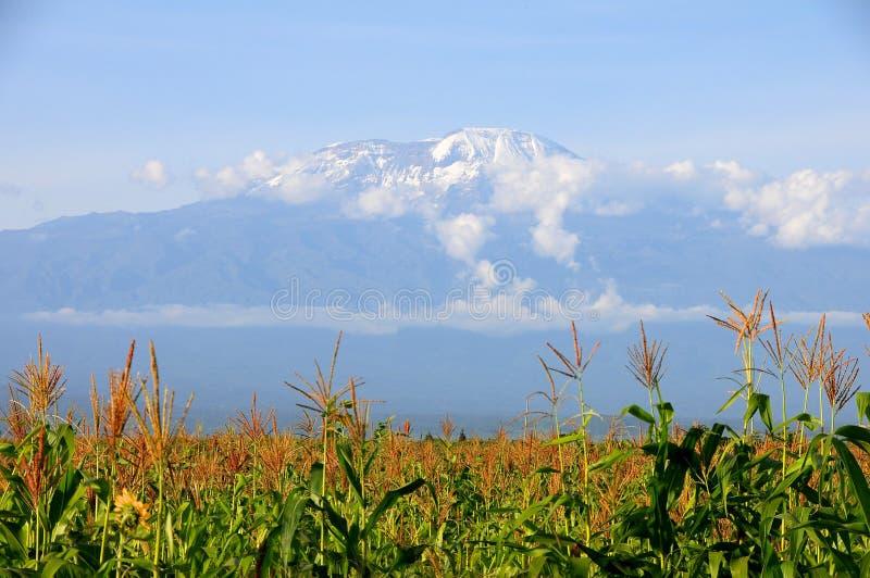 Mt Kilimanjaro - Moshi stockfotografie