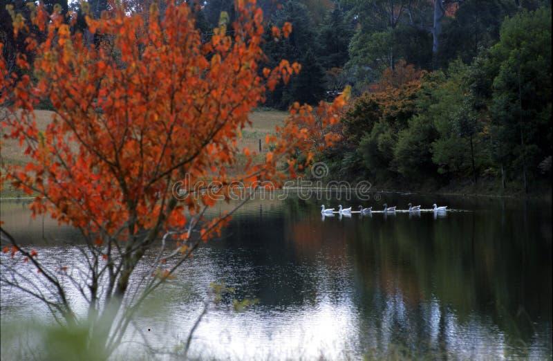Coastline Australia_Mt Lagoon. At Mt Lagoon, NSW Coastline Australia royalty free stock images