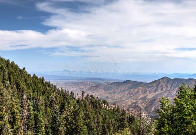 Mt Lemmon-Bereich, nahe Tucson, Arizona Coronado-staatlicher Wald lizenzfreies stockbild