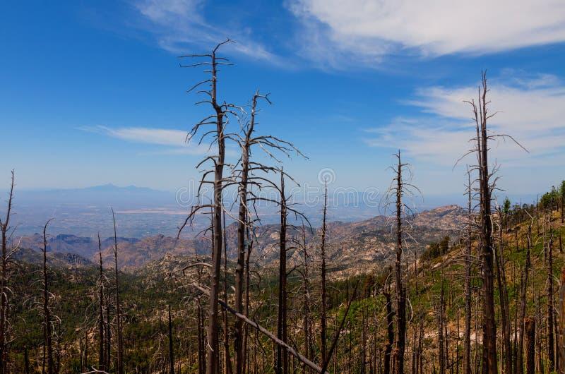 MT Lemmongebied, dichtbij Tucson, Arizona Coronado nationaal bos royalty-vrije stock foto