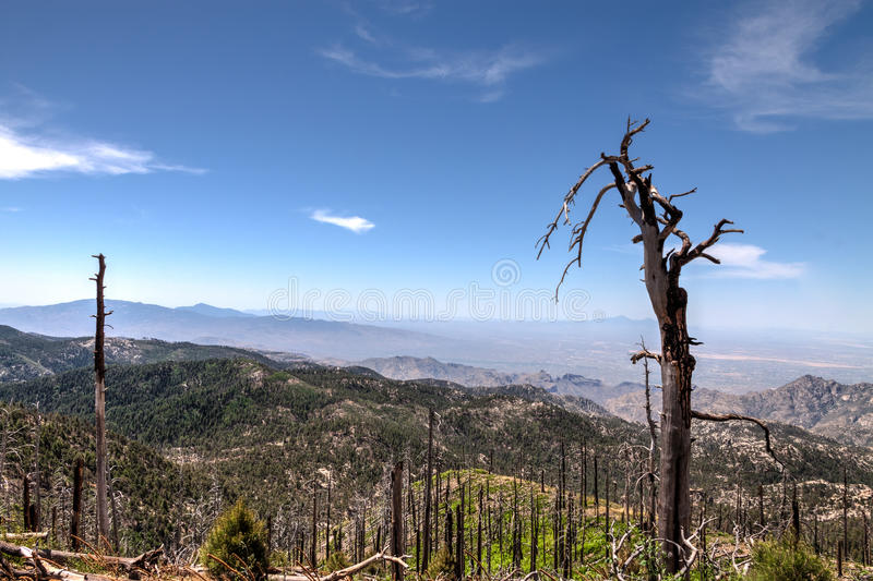 MT Lemmongebied, dichtbij Tucson, Arizona Coronado nationaal bos royalty-vrije stock fotografie