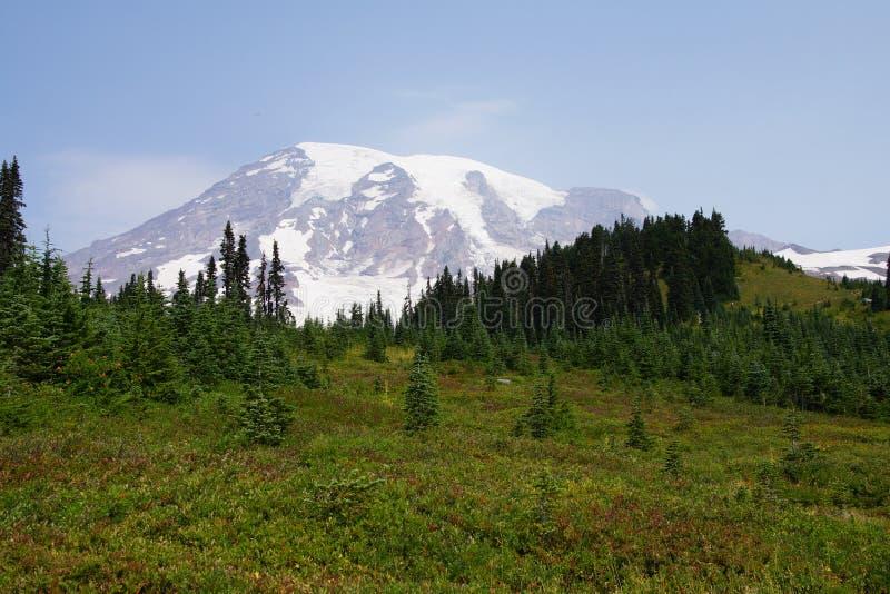 Mt Más lluvioso, con el bosque de la conífera foto de archivo