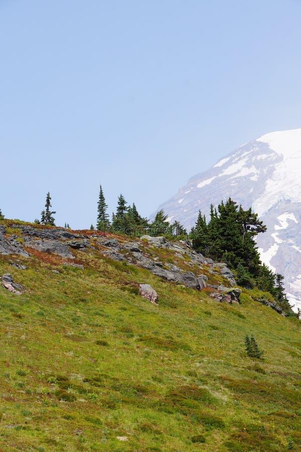 Mt Más lluvioso, con el bosque de la conífera imágenes de archivo libres de regalías