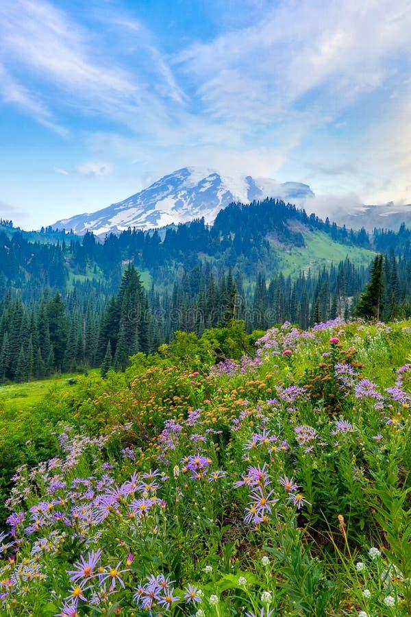 Mt más lluvioso y wildflowers imagen de archivo libre de regalías