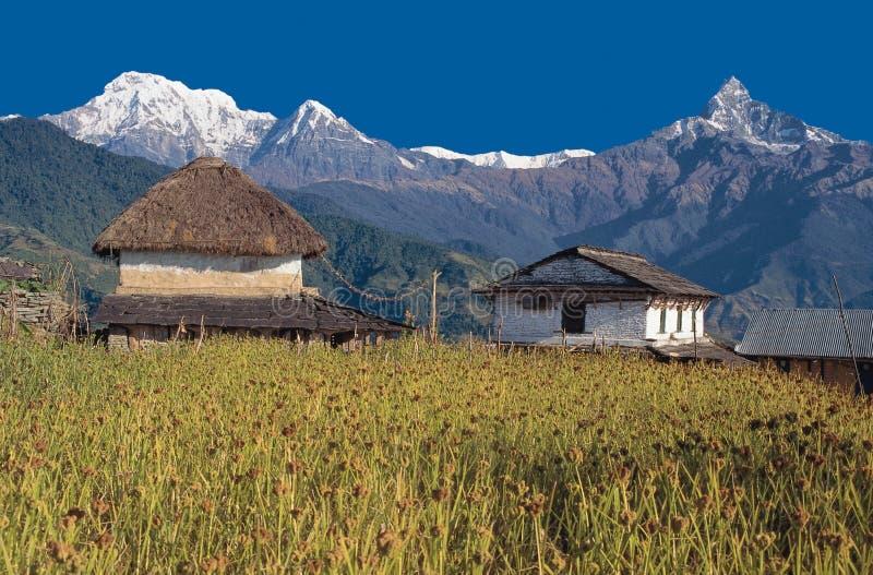 Mt Machhapuchhre/Fishtail, Annapurna söder & Hiunchuli, Dhampus by, Nepal royaltyfri bild