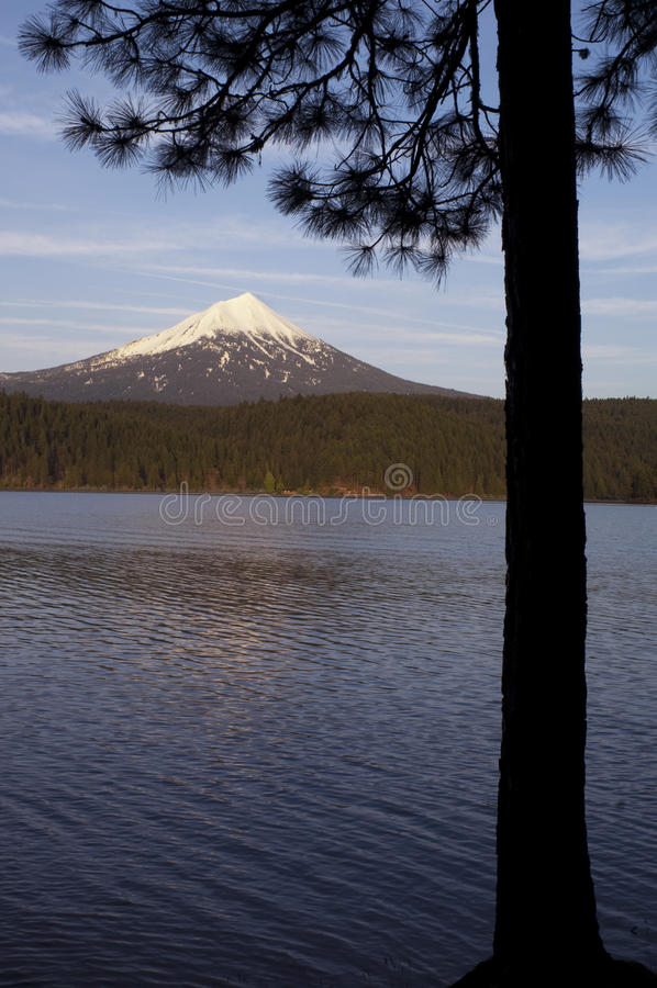 Mt Mcgloughlin Willow湖杉树俄勒冈农村国家 库存图片