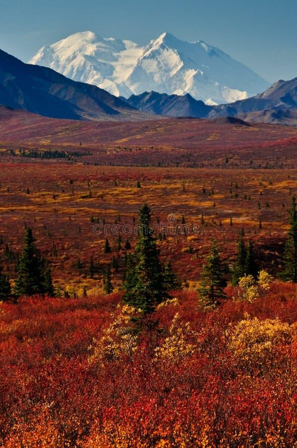 Mt McKinley con la tundra roja del otoño fotografía de archivo libre de regalías