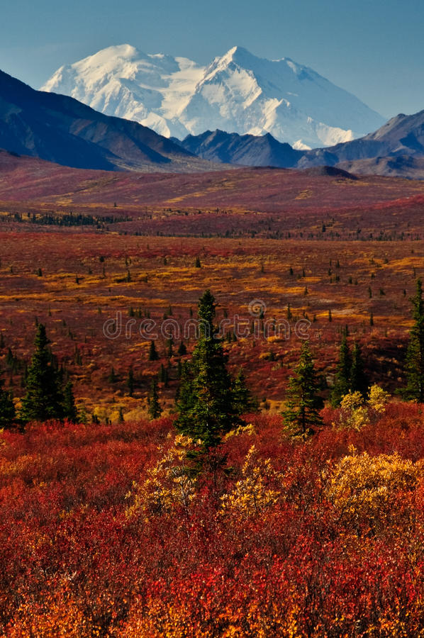 Mt McKinley mit roter Herbsttundra lizenzfreie stockfotografie