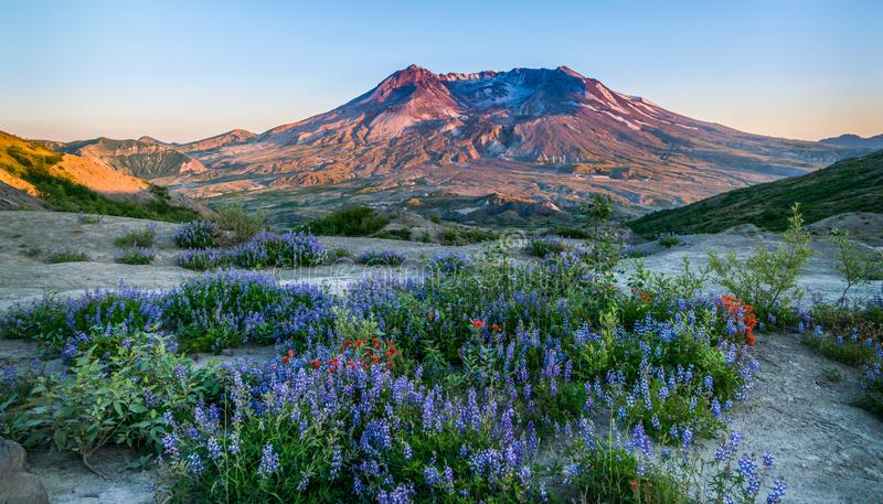 Mt Mount Saint Helens royaltyfri bild