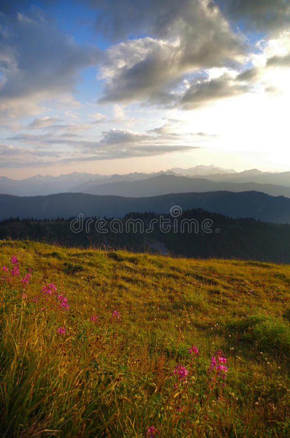 Mt. Olympus Olympic National Park Washington state. Mount Olympus in Olympic National Park at dusk. Located in Washington state. Alpine meadow with flowers in royalty free stock photography