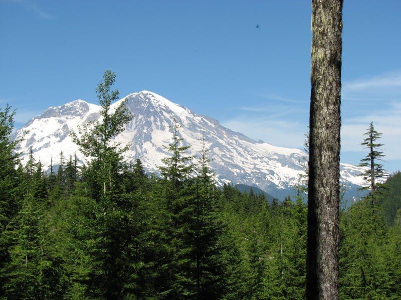 Mt. Plus pluvieux de la forêt images stock