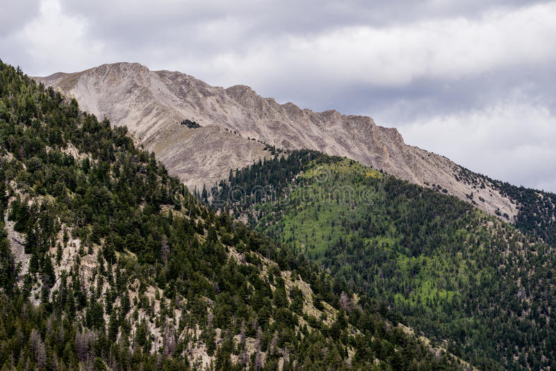 Mt princeton colorado rocky mountains. Mount princeton seen from st elmo colorado in the rocky mountains - forest pine tree evergreens and rocky summit peak royalty free stock image