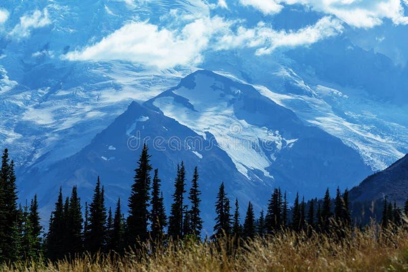 Mt rainier fotos de stock royalty free