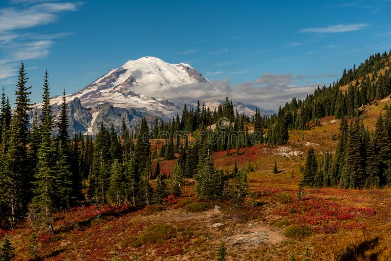 Mt Rainier Looms Over Field arkivbild