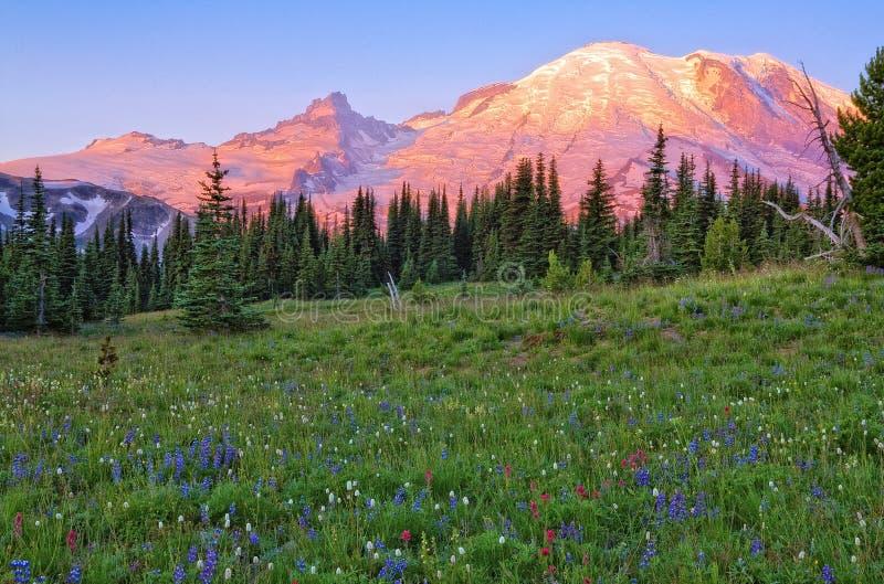 Mt. Rainier Meadow stock photos