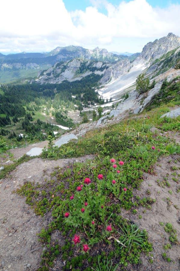 Download Mt. Rainier National Park Stock Photos - Image: 26833973