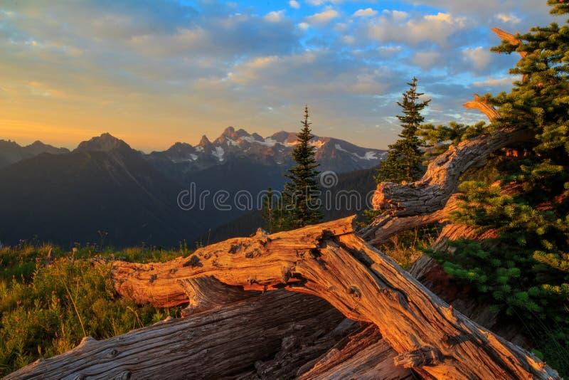 Mt Rainier National Park, Washington images libres de droits