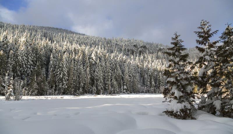Mt Rainier Park en invierno foto de archivo