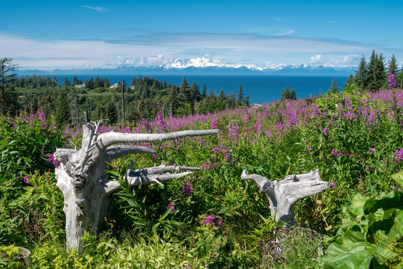 Mt Redoute im Startpunkt Alaska mit Treibholz und Fireweed lizenzfreie stockfotografie