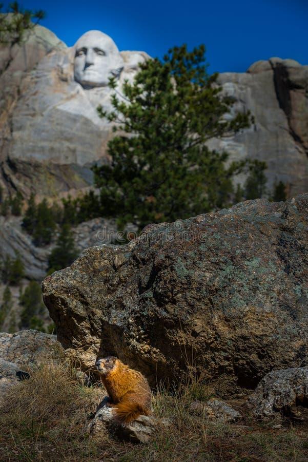 Download Mt Rushmore土拨鼠 库存图片. 图片 包括有 browne, 爱国心, 乔治, 修改, 亚马逊 - 72368931