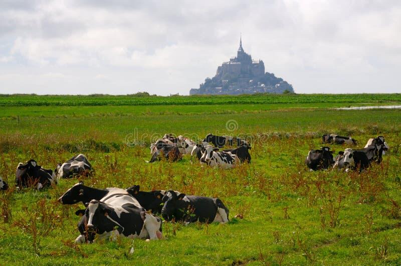 Mt. Saint Michel com vacas imagens de stock royalty free
