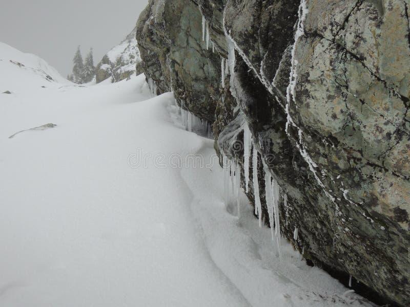 Mt Seymour стоковая фотография rf