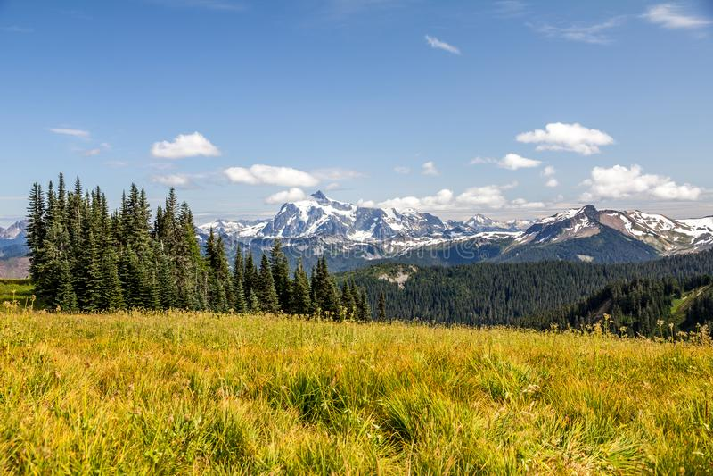 Mt Shuksan看法在地平线分界高山草甸的  库存图片
