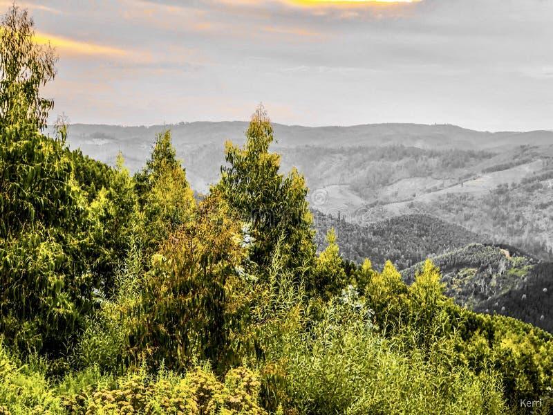 Mt Tazzie obrazy royalty free