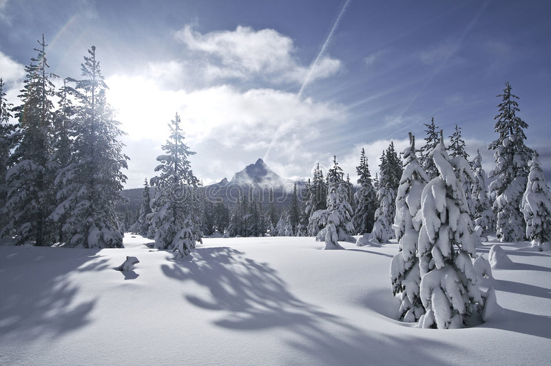 Mt Washington Snowfield. Mount Washington seen through a forest snowfield stock images