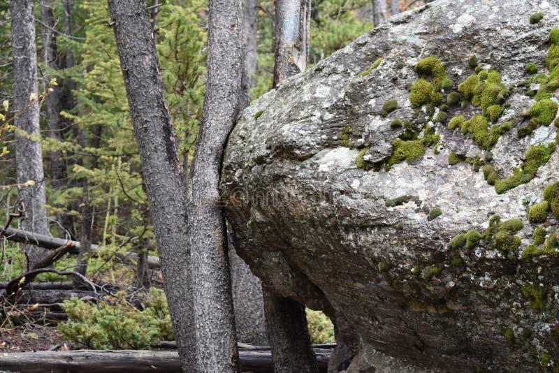 ¡Muévase sobre árbol! imagenes de archivo