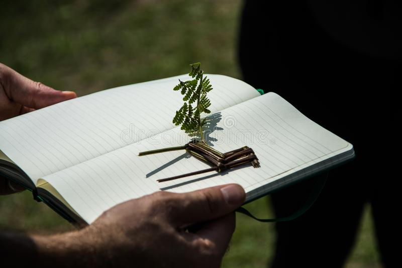 Muñeca animal hecha a mano de pequeñas ramas imágenes de archivo libres de regalías