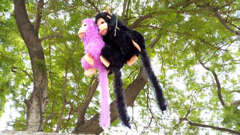 Muñeca del mono que cuelga de una rama de árbol imagenes de archivo