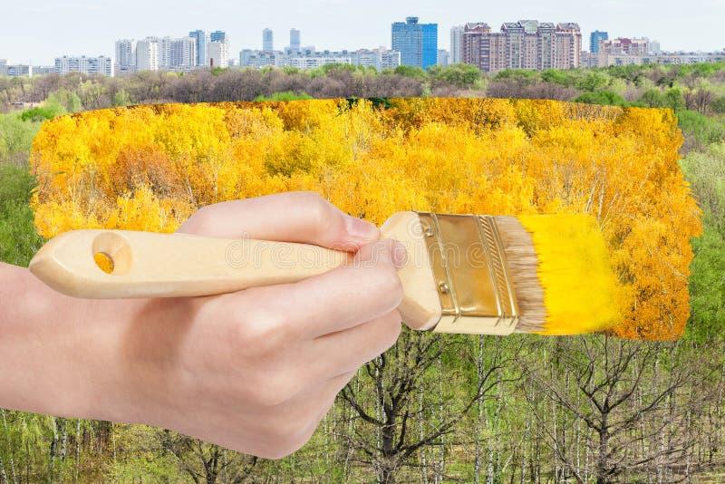 Muśnięcie maluje żółtego ulistnienie na zielonych lat drzewach zdjęcia royalty free
