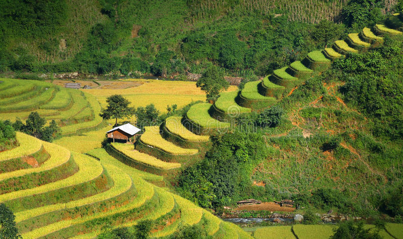 Download Mu Cang Chai terraces 06 stock photo. Image of phone - 39512068