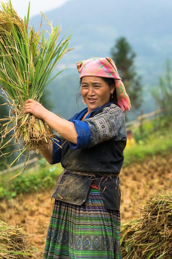Mu Cang Chai, Vietnam - 17 Sep, 2016: Het portret van de vrouw van minderheidshmong oogst rijst op terrasvormig padiegebied royalty-vrije stock foto's