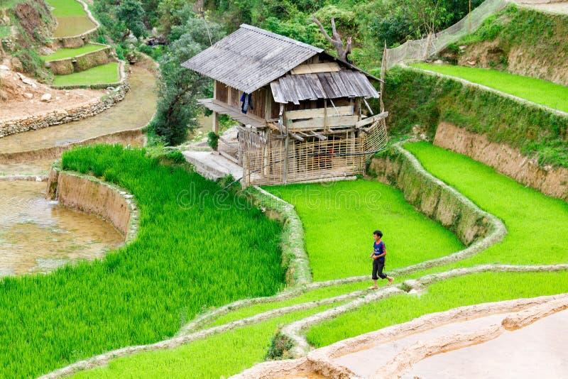 MU CANG CHAI, YENBAI, VIETNAM - MEI 16, 2014 - een niet geïdentificeerde etnische jongen die onlangs geplante padiegebieden overg stock afbeeldingen