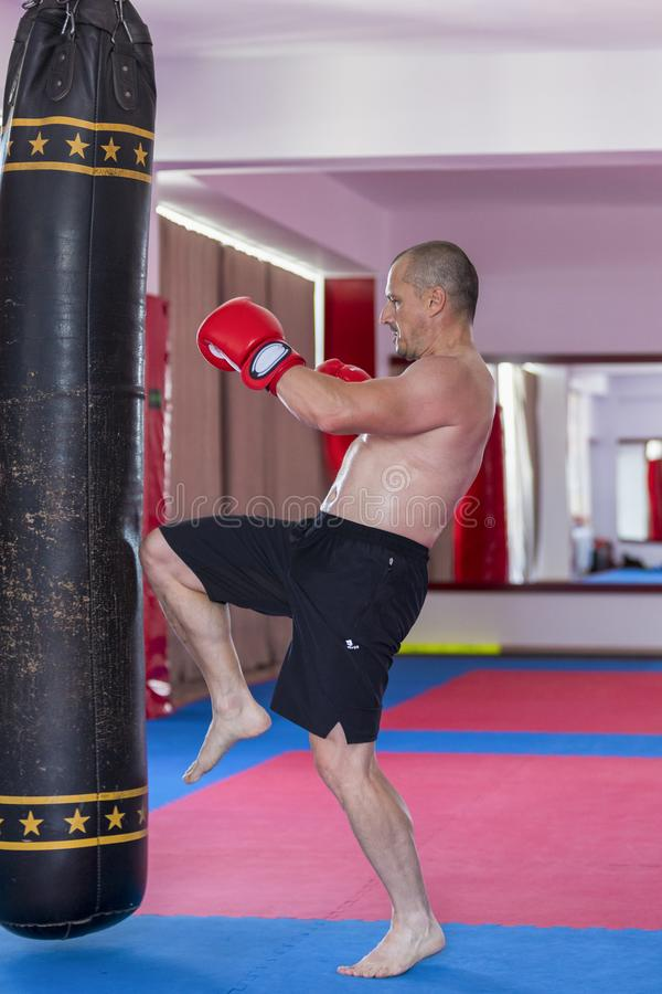 Muay thai fighter hitting the heavy bag. In the gym royalty free stock photo