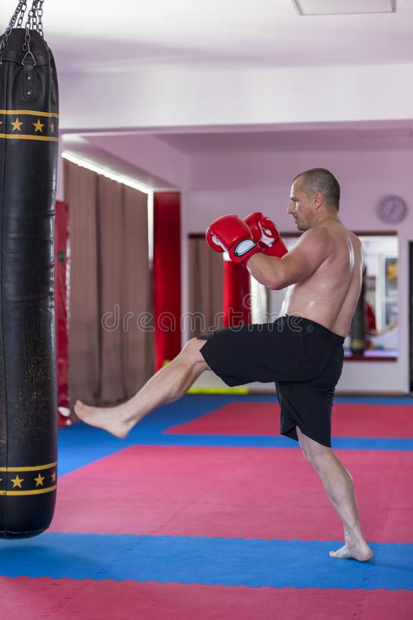 Muay thai fighter hitting the heavy bag. In the gym royalty free stock image