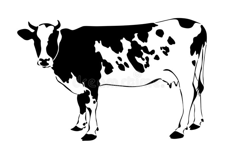 Download Mucca Immagini Stock Libere da Diritti - Immagine: 19720359