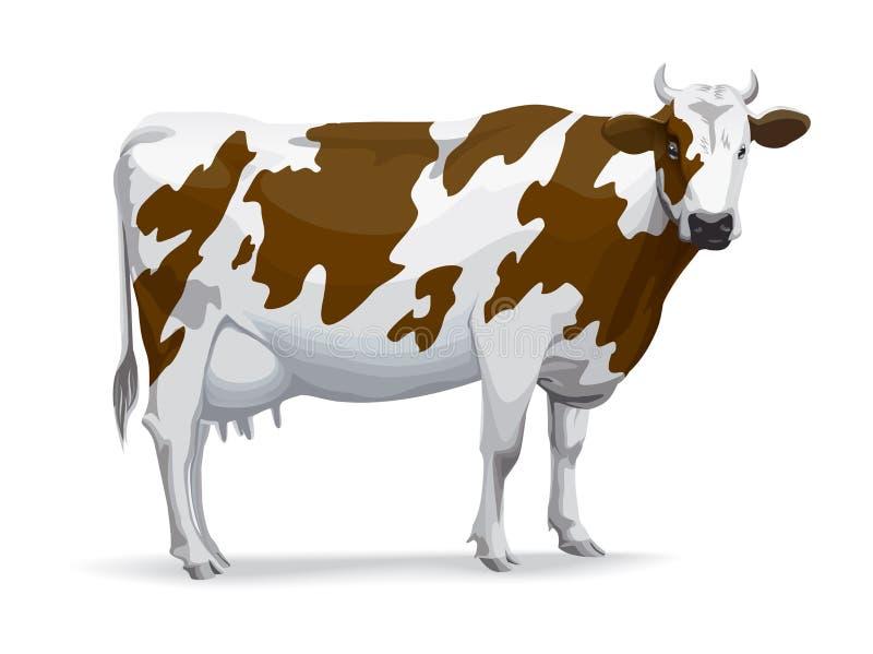 mucca illustrazione vettoriale