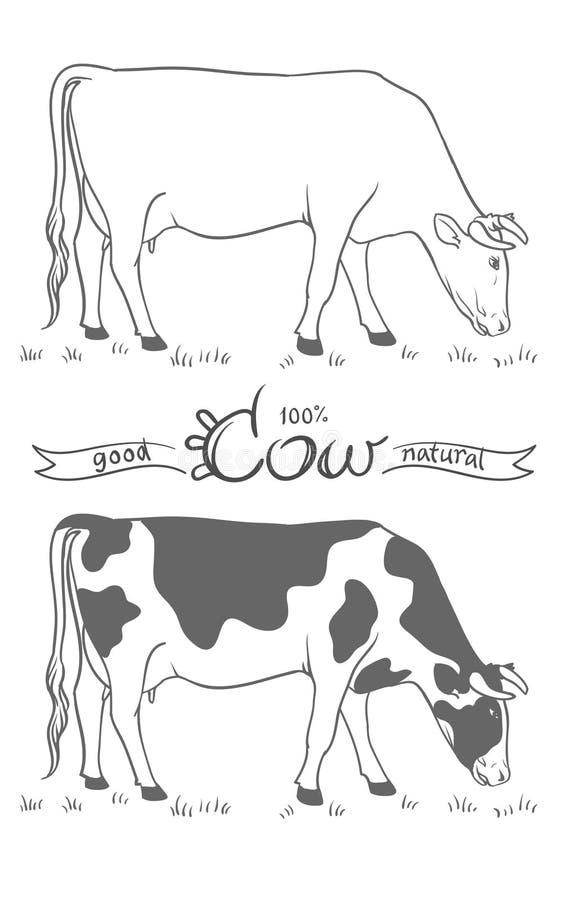 mucca Mucca che mangia erba Mucca isolata, insieme degli elementi di vettore illustrazione di stock