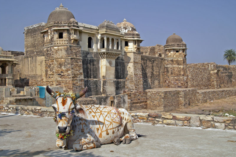 Mucca indiana santa immagine stock libera da diritti